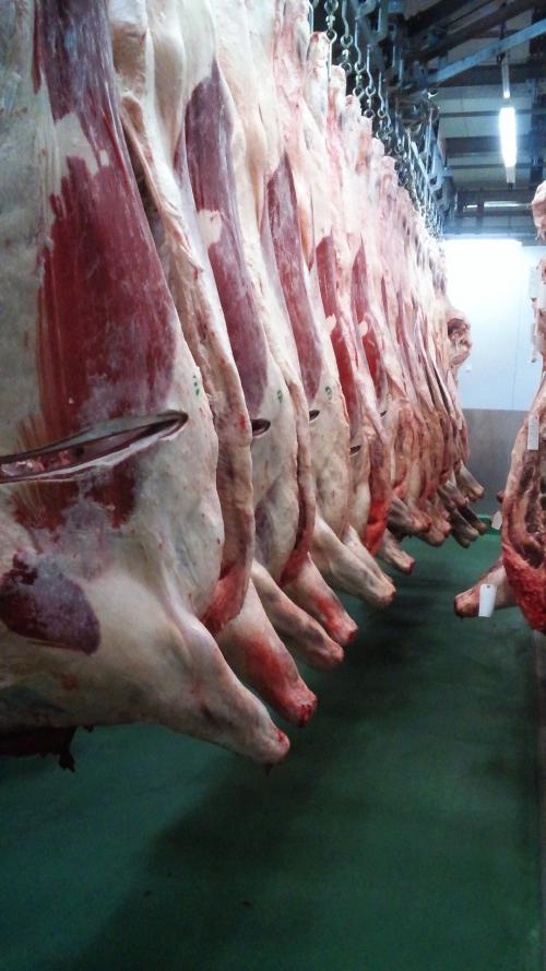 牛肉の一頭買い!芝浦の競り場。