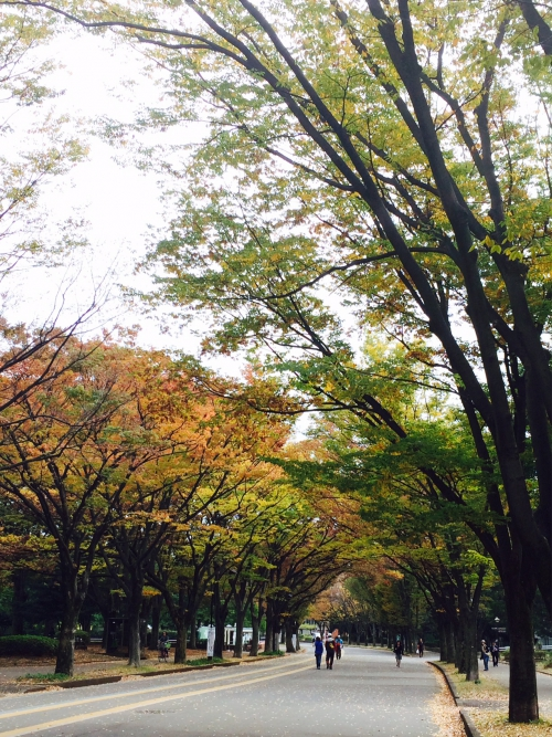 小さい秋 @駒沢公園
