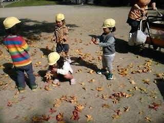 公園中に落ち葉がいっぱい風に吹かれて落ちてくるよ〜  肌で秋を、感じよう!