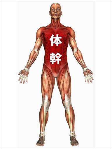 体幹の役割について