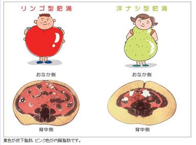 『肥満②』