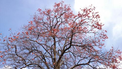 彩り季節風 初冬の阿智村撮影会にて