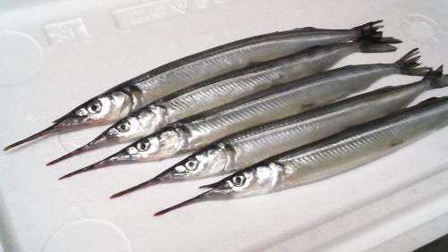 さより!ヘルシーな白身魚です。熱燗にどうぞ。