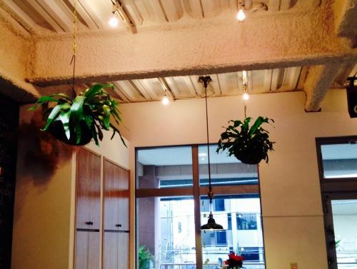 多肉植物やエアープランツetc、、不思議植物がある美容室♪