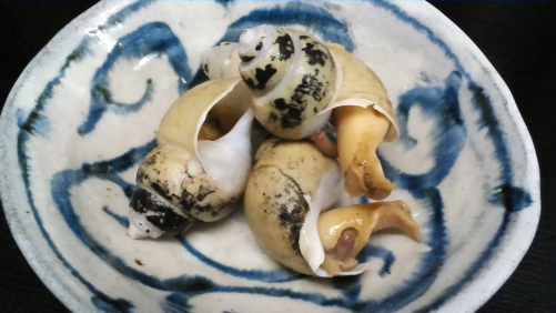 バイ貝の旨煮!新潟県佐渡島で採れたバイ貝!