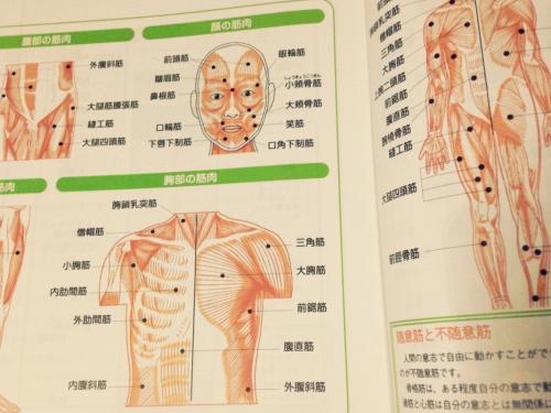 セラピスト養成講座  身体について学ぶ