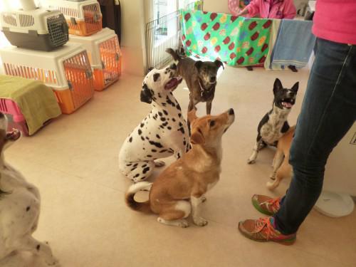 犬の保育園:2015.3.24
