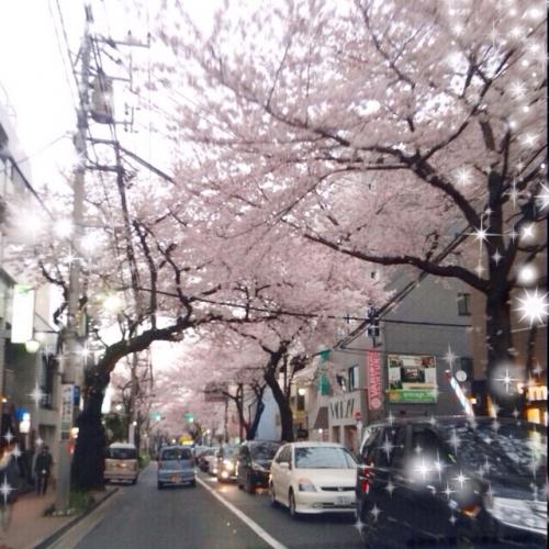 桜満開[ロミロミアロマサロン&スクール]