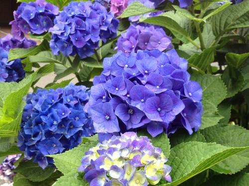 初夏の花々が美しい季節ですね。