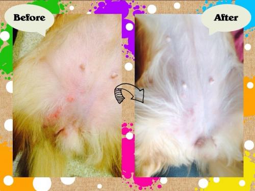 ペットの湿疹かぶれに効くアロマオイル