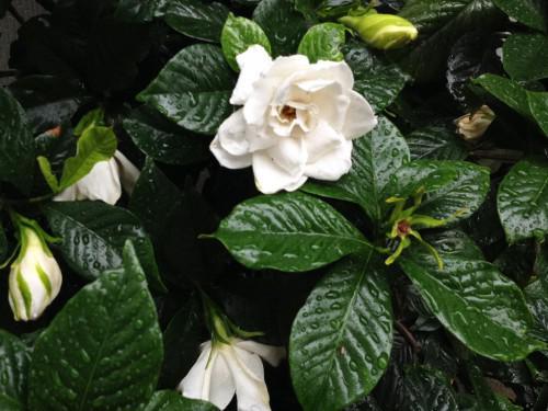 「暗香」-香りの良い花