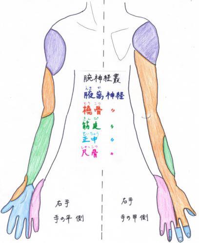 末梢神経の絞扼(こうやく)障害③