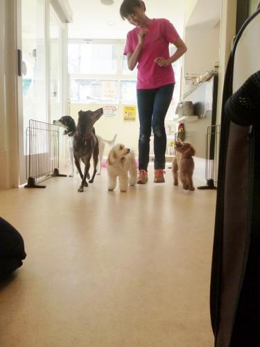 子犬の保育園:2015.7.14