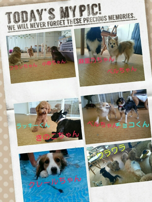 ドッグトレーナーの愛犬トレーニングの様子