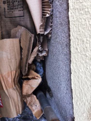 目黒区内でアリ駆除を行いました