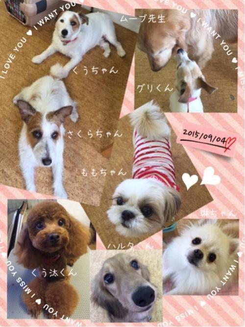 【犬と洋服の関係】