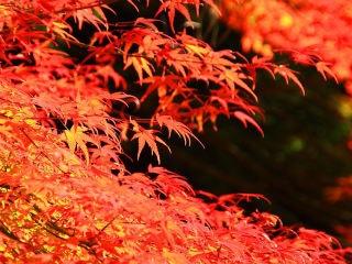 秋の味覚を先取り!