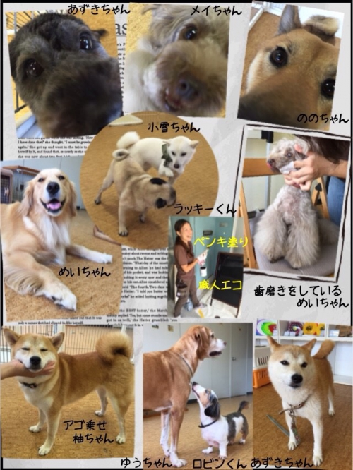 シニア犬 大型犬もOK