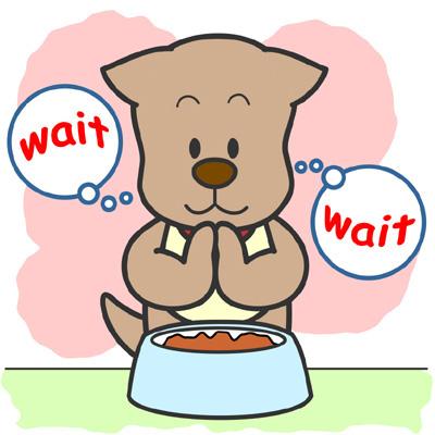 犬猫の東洋医学での六腑の一つ胆について