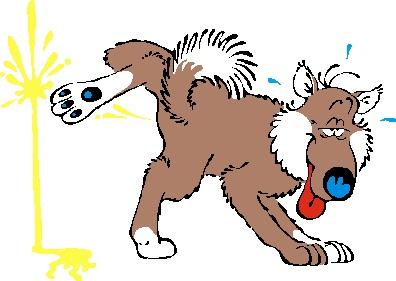 犬、猫の東洋医学での小腸の話、下痢や血尿