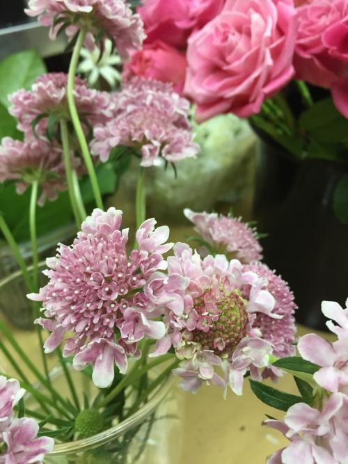 大好きな花、スカビオサ