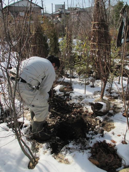 埼玉県川口市の植木屋さんな風景  ⅰn  雪景色(笑)