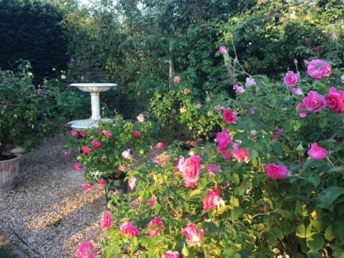 ガーデンスタジオ:早朝散歩 2