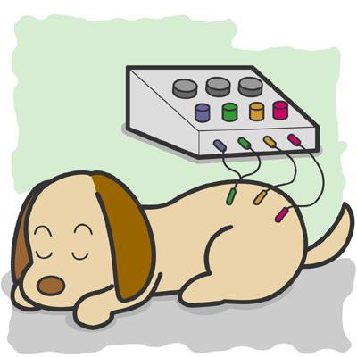 犬、猫の十二経脈の考えについて