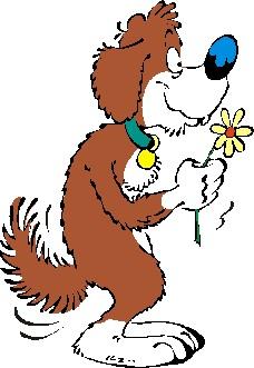 犬、猫の心臓を守っている心包との関係