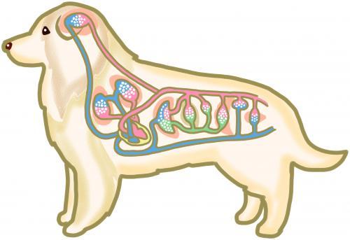 犬、猫の慢性疾患になるときの経脈