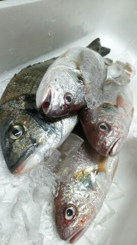 今日の新鮮地魚たち。(^-^)