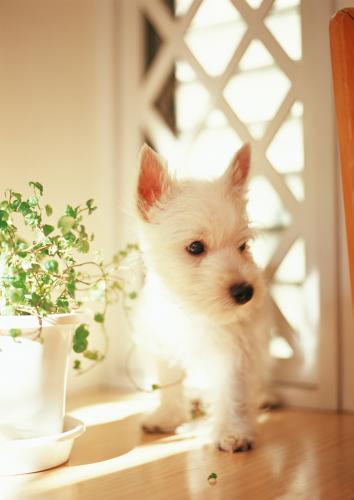 犬、猫のアトピー性皮膚炎の内側の原因として起こる乾燥について