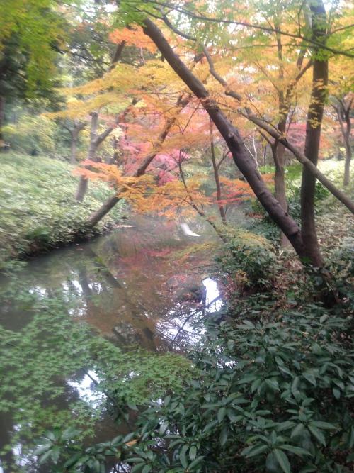 六義園の紅葉散策☆12/2現在どんな感じ?