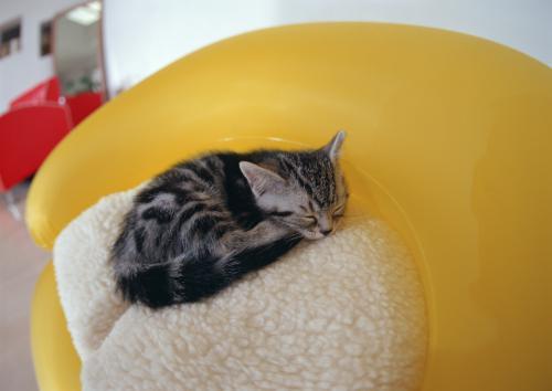 猫の甲状腺機能亢進症の鍼灸治療 気陰両虚について