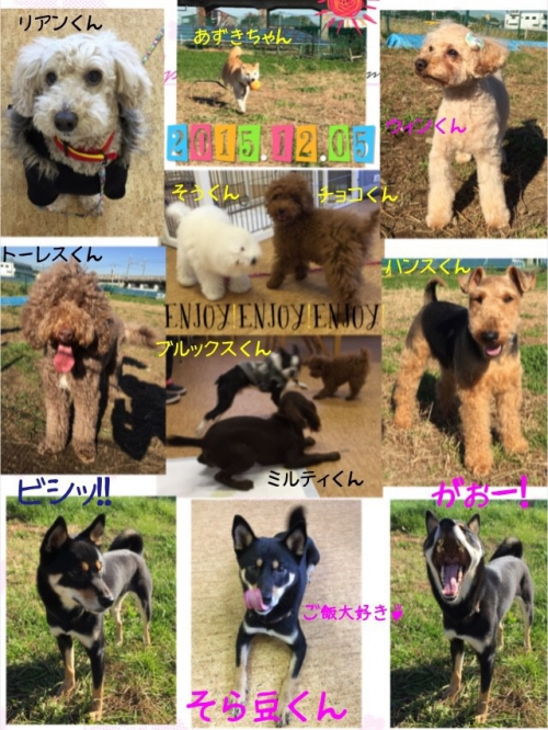 柴犬が多い犬の保育園ムーブオン