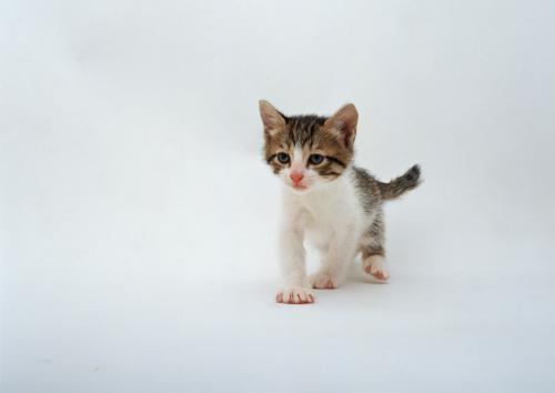 一般的な猫の甲状腺機能亢進症の補助治療について