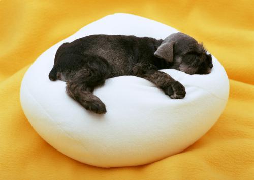 一般的な犬の甲状腺機能低下症の治療について