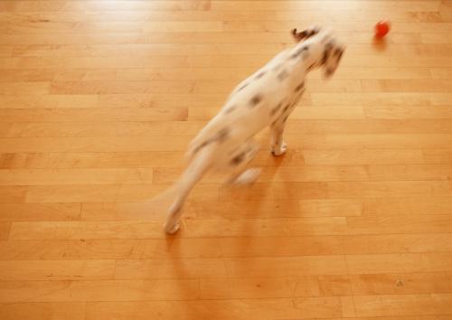 偽物の犬の甲状腺機能低下症について