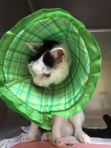 犬猫の慢性腎不全の鍼灸治療