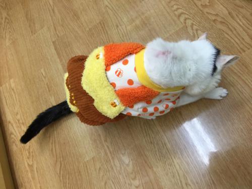 猫の甲状腺機能亢進症、心筋症、慢性腎不全の治療の話