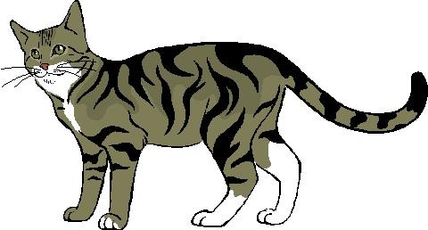 18歳の猫の甲状腺機能亢進症のホモトキシコロジーの治療