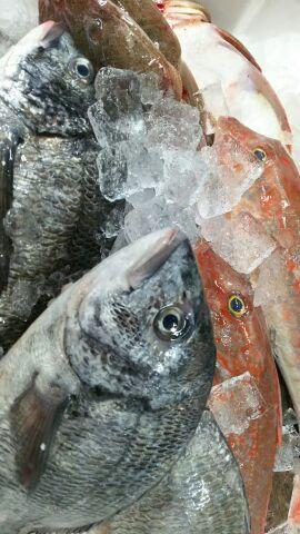 本日入荷の地魚