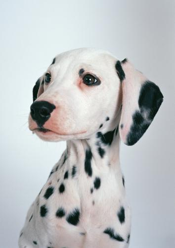 犬猫の肝臓の値が上がっている時に考える犬腫、猫種