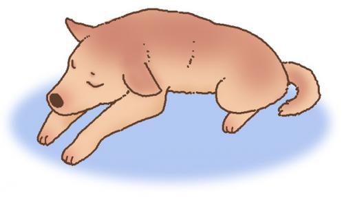 犬猫の肝臓の病気があることで腹水が溜まってしまう原因