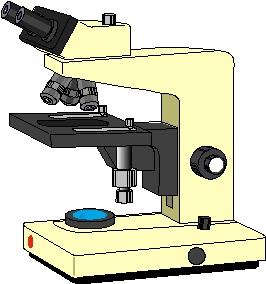 犬の銅関連性慢性肝炎の組織学的検査