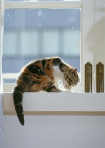 猫の肝臓の病気、肝リピドーシスの症状について