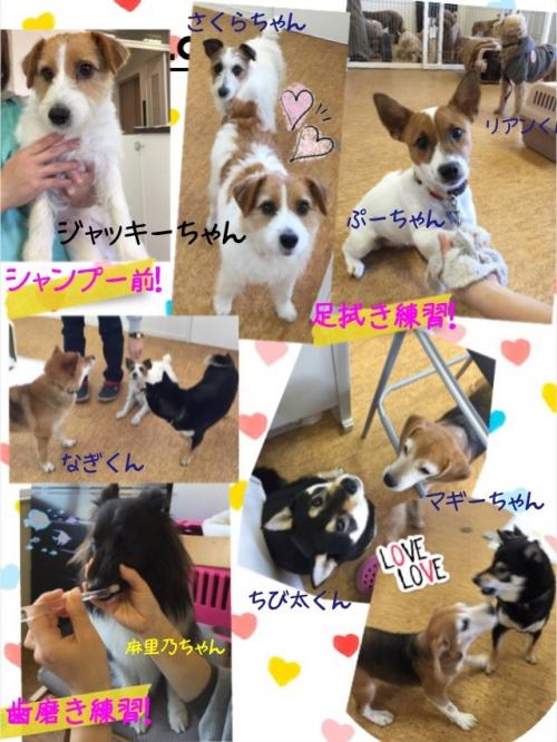 アメリカの犬事情から日本を見てみた