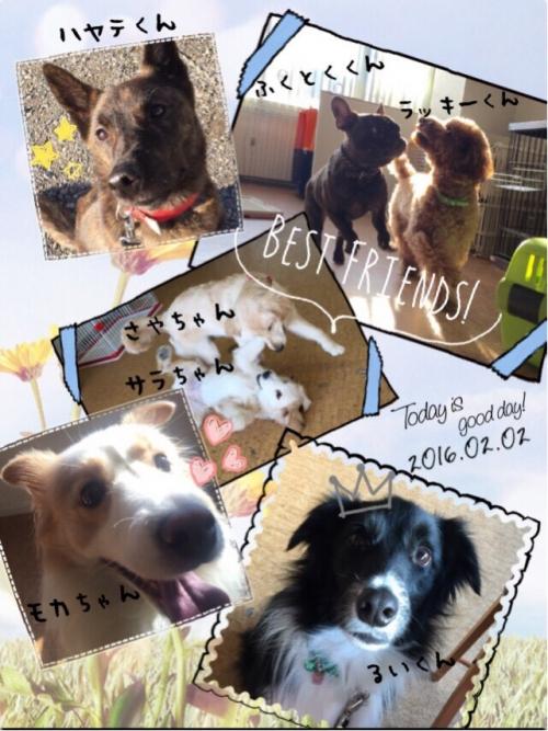 アメリカのシニア犬事情から日本を見てみる