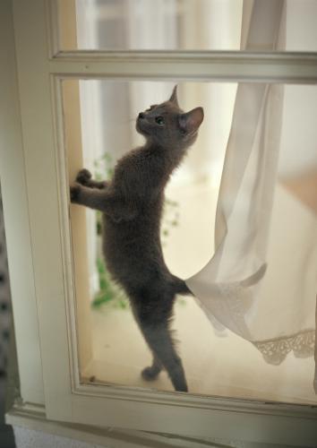 猫の肝臓の病気の好中球性胆管炎の治療について
