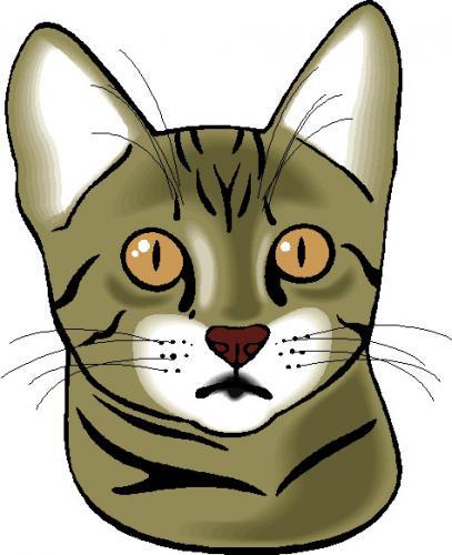 猫の肝臓の病気の肝外胆管閉塞について